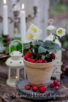 Julros   blomsterverkstad   Sköna Hem