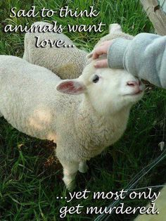 All farm animals are still animals, put it together, just because they are farm animals doesn't mean they don't have feelings!