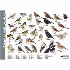 Vogels in de winter - tringa-paintings