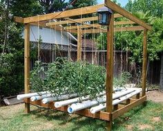 Hydroponic Garden...uses less space since roots don't have to spread out in search of food and water.