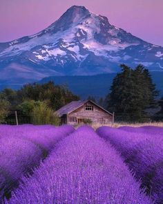 Nature Aesthetic, Travel Aesthetic, Hood River Oregon, Landscape Photography, Nature Photography, Cool Pictures, Beautiful Pictures, Mount Hood, Enjoy The Sunshine
