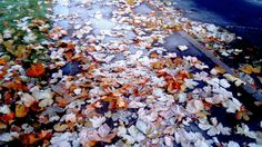 Frosty Autumn Walk