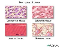 Epithelial tissue protects underlying structures acting as barriers permitting the passage of substances and secrete substances. a. Simple squamous b. Simple cuboidal c. Simple epithelium d. Pseudostratified columnar e. Stratified squamous f. Stratified cuboidal g. Stratified columnar h. Transitional