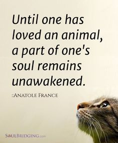 """Love of Animals >> """"Until one has loved an animal, a part of one's soul remains unawakened."""" - Anatole France If you love cats as much as we do, check out our animal canvas wrap range, click that link! Animal Lover Quotes, Lovers Quotes, Animal Sayings, Animal Humor, Funny Animal, Motivacional Quotes, Life Quotes, Daily Quotes, Framed Quotes"""