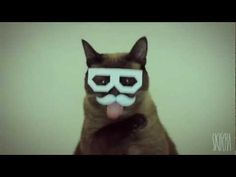 ♣ [hd] DUBSTEP CAT - THE BEST DUBSTEP CAT EVER! MUST SEE ♣