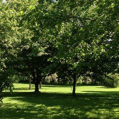Arboretum 1 Photo Location, Sidewalk, Plants, Gardens, Sidewalks, Plant, Pavement, Walkways, Planting