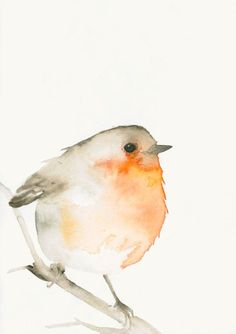 watercolor bird with red breast - Google Search