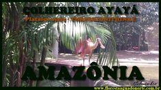 Amazônia - Aves Aquáticas - Colhereiro Ayayá - Platalea ajaja - Celcoimb...