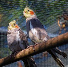 two little dickie birds ward park bangor n ireland
