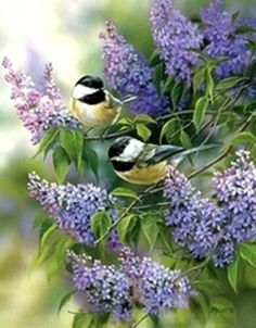 Lilac Garden.