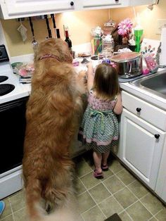 Golden Retrievers are loyal, loving, and totally adorable. If you're having a bad day, fix it immediately with these forty cute Golden Retriever pictures! Funny Animal Images, Funny Animals, Cute Animals, Animals Images, Cute Puppies, Cute Dogs, Dogs And Puppies, Doggies, Dog Pictures