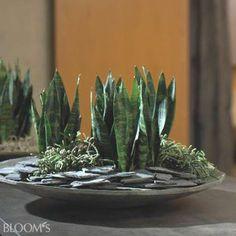 bowl with slate chips Succulent Terrarium, Succulents Garden, Planting Flowers, House Plants Decor, Plant Decor, Dish Garden, Garden Pots, Container Plants, Container Gardening