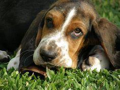 Oggi vi parliamo dei 7 alimenti che potrebbero uccidere il vostro cane.