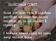 ok.ru Small Farm, Growing Plants, Diet And Nutrition, Vegetable Garden, Gardening Tips, Helpful Hints, Garden Design, Life Hacks, Garlic