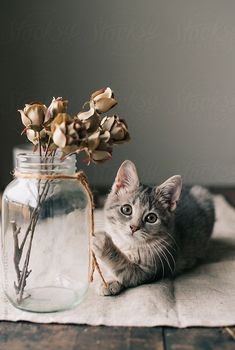 A cute kitten playing with a vase of flowers on a desk Cute Kittens, Cute Baby Cats, Kittens Playing, Cute Baby Animals, Animals And Pets, Gato Gif, Cute Cat Wallpaper, Cat Aesthetic, Tier Fotos