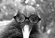 Kiwi Bird looking very smart