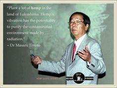 plant hemp to purify
