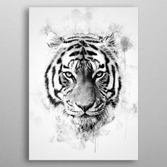 Tiger Head Black and White metal poster