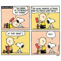 The origin of beagle