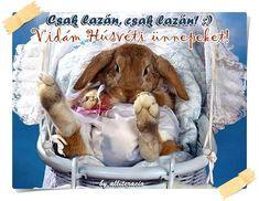 Pictures for Desktop: rabbit wallpaper Rabbit Wallpaper, Hd Wallpaper, Wallpapers, Baby Bunnies, Cute Bunny, Little Bunny Foo Foo, Secret Life Of Pets, Desktop Pictures, Pet Clothes