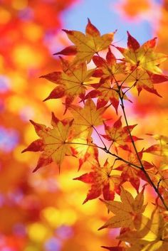 Relaxing array of autumn colors