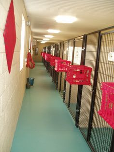 kennels Photo Gallery .... loose kibble falls through, off the floor and air circulation...love the crates idea!