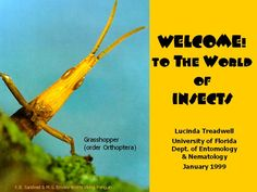 Welcome! to the World of Insects