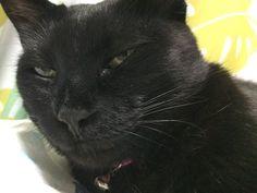 """""""今日のニヤリ!  ほほう・・・物(エサ)はちゃんと港に入ってんのか?  と、ニヤリ・・・_。  #猫 #ネコ #ねこ #猫好きさんと繋がりたい #cat"""""""