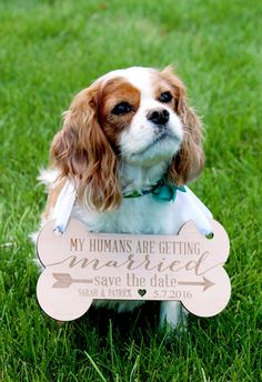 Pet Sign for Engagement Save the Date Photography by ZCreateDesign