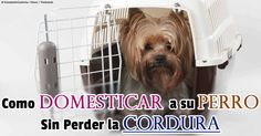 El entrenamiento de perros a cualquier edad también incluye el entrenamiento de caja, refuerzo positivo, ajuste de precisión especialmente en los perros con necesidades especiales. http://mascotas.mercola.com/sitios/mascotas/archivo/2014/05/22/como-entrenar-a-su-perro-parte-2.aspx