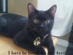 Rascal has been loved for 440 days by guardian Erin. Click to learn how you can share your #IveBeenLoved photos too!