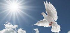 Mensagem do Dia: Pois há um só Deus e um só mediador entre Deus e o...