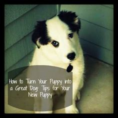 How to Turn Your Puppy into a Great Dog: Tips for Your New Puppy