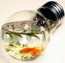 piccoli acquari di design - Cerca con Google