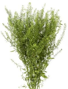 Mini Pennycress a great filler