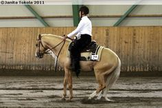 Quarter horse stallion Arcletic Classy Jac by Arc King Cody out of Classy Cody Jac
