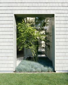Garden: Small Courtyard Modern Single House Design With Plants And White Exposed Brick Wall Ideas