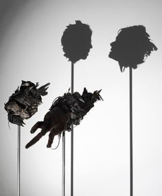 Tim Noble and Sue Webster - Sculpture Instalation Art, Different Kinds Of Art, Urban Street Art, Jackdaw, Perspective Art, Shadow Art, American Gods, No Photoshop, Recycled Art