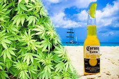 Producent piwa Corona kupuje udziały w firmie będącej producentem marihuany