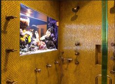 Can you imagine a salt water fish tank in your shower?