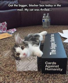 Funny Animal Picture Funny Animal Pictures Of The Day 19 Pics Funny Animal Memes, Funny Animal Pictures, Cute Funny Animals, Cat Memes, Cute Cats, Funny Cats, Animal Humor, Funniest Animals, Cat Fun