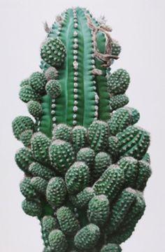 Cacti bubbles | Lee Kwang Ho — Patternity