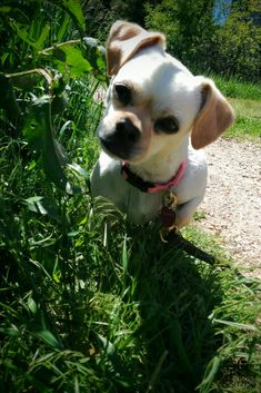 Niches, cages, chenils et parcs chien Cute Cats And Dogs, Animals And Pets, Funny Animals, Cute Animals, Cute Pets, Chihuahua Puppies, Dogs And Puppies, Poochon Dog, Animal Pictures