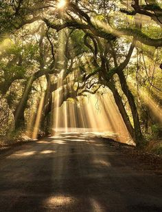 Instant Manifestation, The Path Lights Up ~ Abraham Hicks http://youtu.be/9RlJLatT3Tg Vortex, Vibrational Reality, The Full Picture, The Lighted Path | Botany Bay Rd Edisto Island, SC Ray of light in a lonely road | repinned by Loving With Joy