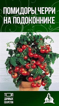 Green Garden, Garden Plants, Small Farm, Fruit And Veg, Gardening Tips, Christmas Wreaths, Home And Garden, Vegetables, Holiday Decor