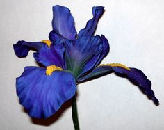 Gumpaste Iris! So realistic! It's amazing!  http://cakecentral.com/gallery/1738286