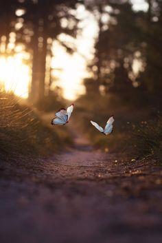 Another world and universe citizen... — lsleofskye: Golden light