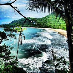 Brasilien Palm Trees, Places To See, Beaches, The Good Place, Travelling, To Go, Coast, Wanderlust, Around The Worlds