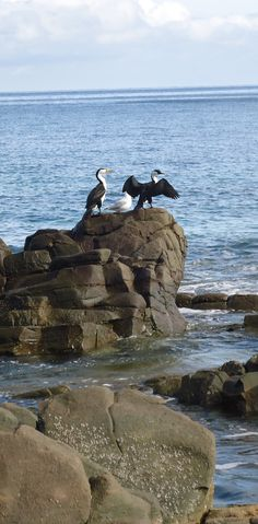 birds, Marino Rocks, South Australia