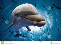 Dolphin Underwater Looking At You Stock Photo - Image: 104585890